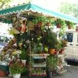 ブエノスの市内、露天の花屋